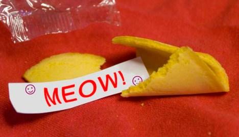 Cat Fortune cookie